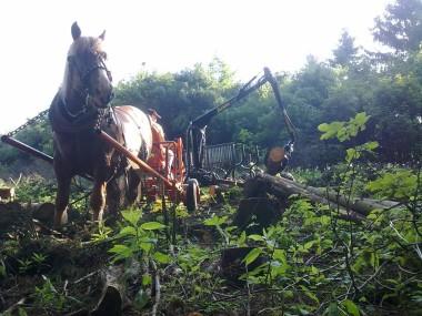 Vyvážačka s koňom